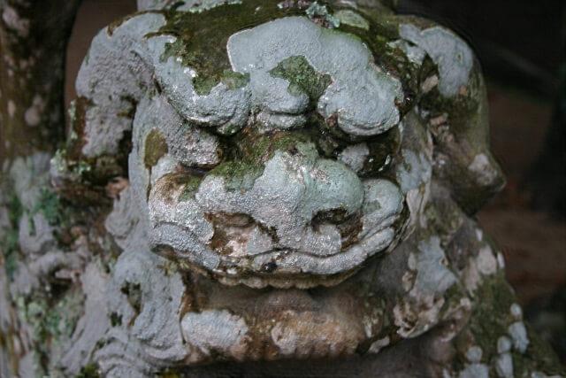白兎神社初詣の参考画像