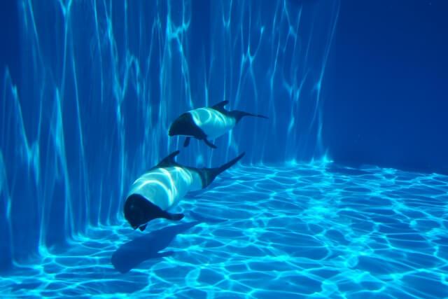 うみの杜水族館の参考画像